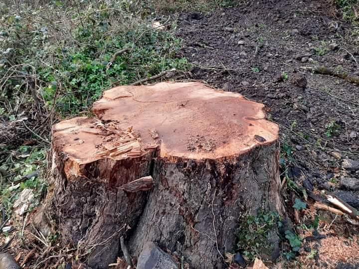 Development company defends Blackcastle tree felling