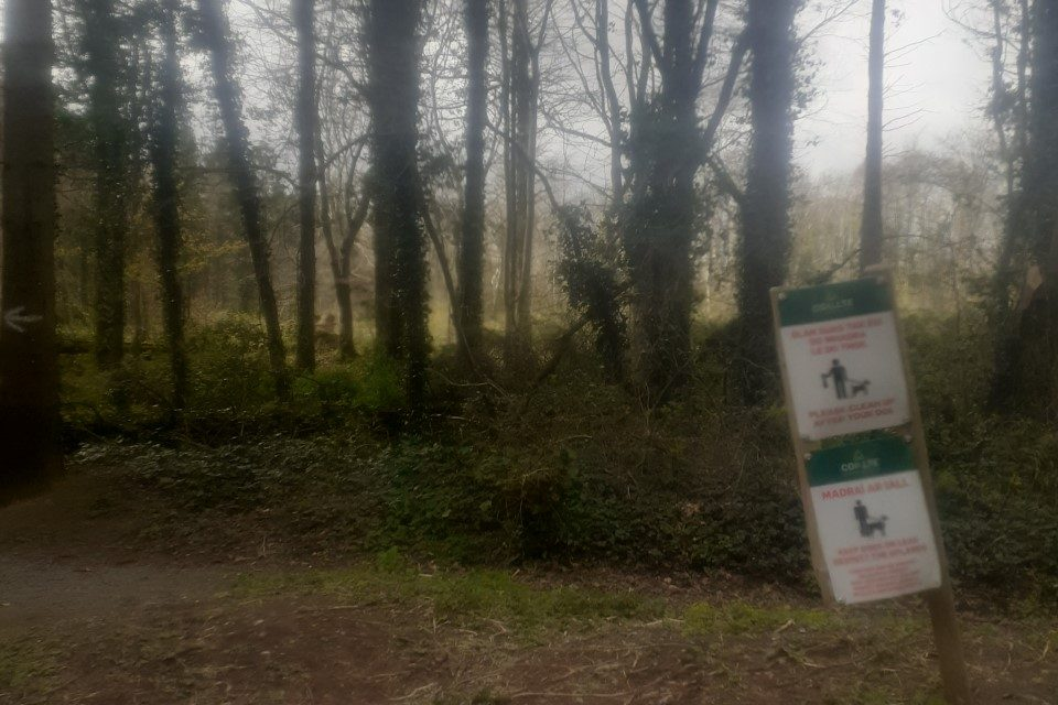 Remains discovered in Slane are not human